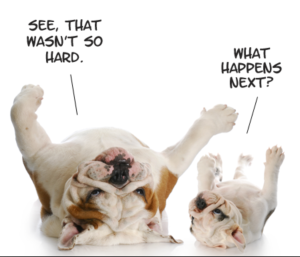 Dogs-learning-new-things1